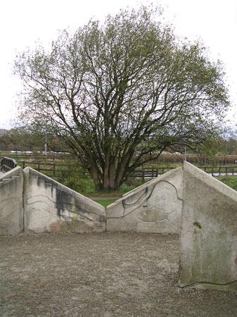 Inspirational Trees Burrs-10