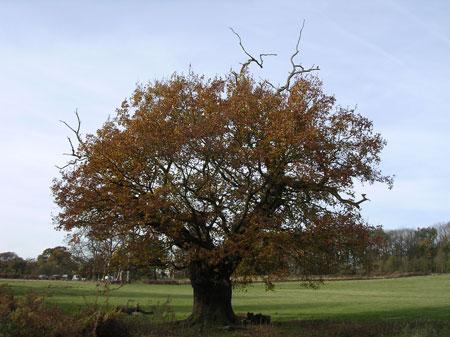 Inspirational Trees Pittpa10