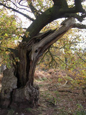 Inspirational Trees Pittpa11
