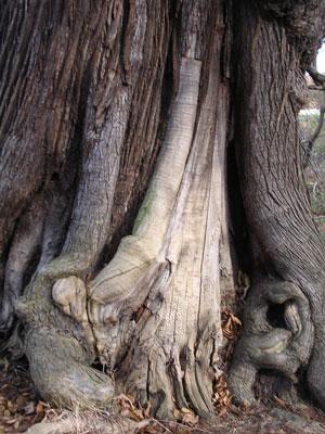 Inspirational Trees Sweet-10