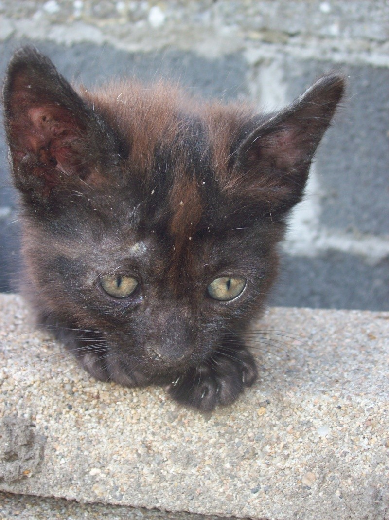 3 petits chatons a adopter ( 2 mois ) 106_0145