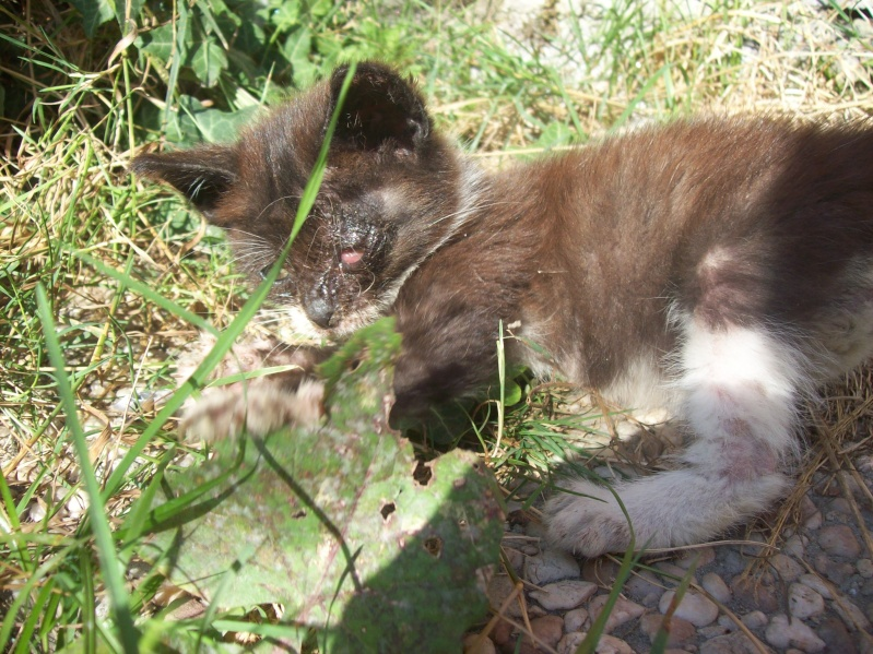 3 petits chatons a adopter ( 2 mois ) 106_0146