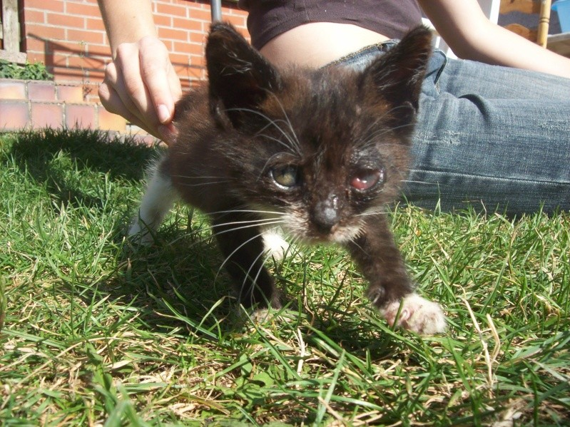 3 petits chatons a adopter ( 2 mois ) 106_0147