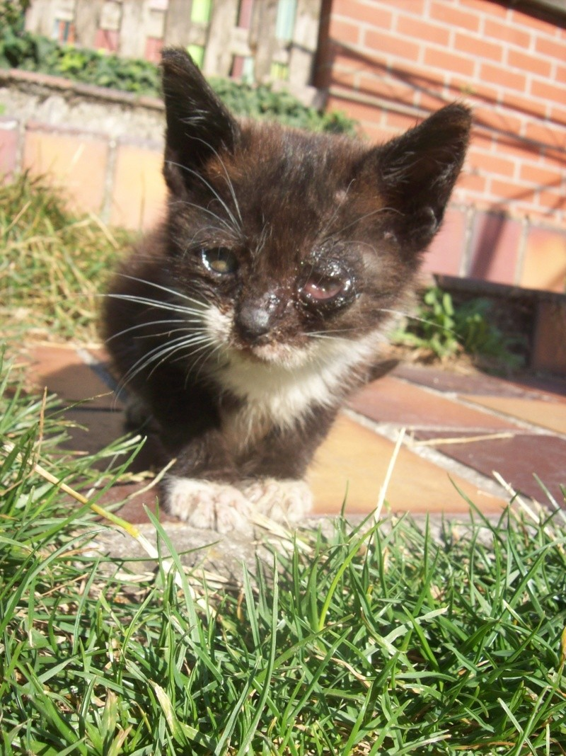 3 petits chatons a adopter ( 2 mois ) 106_0148
