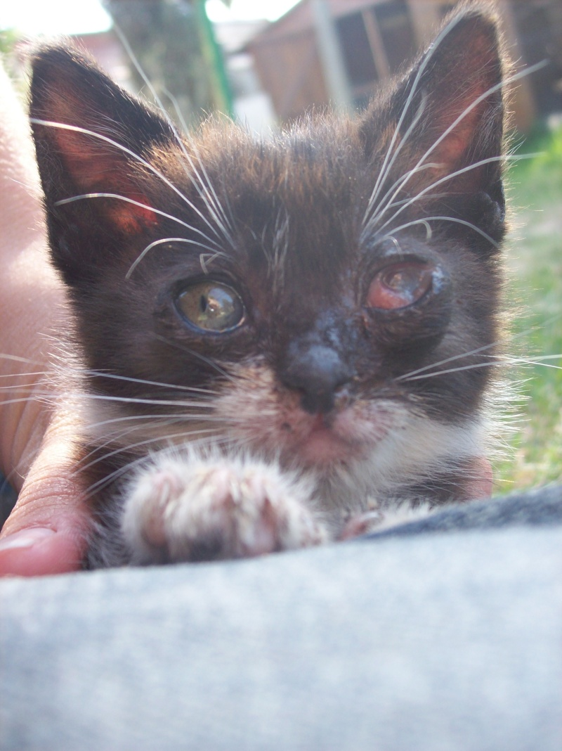 3 petits chatons a adopter ( 2 mois ) 106_0149