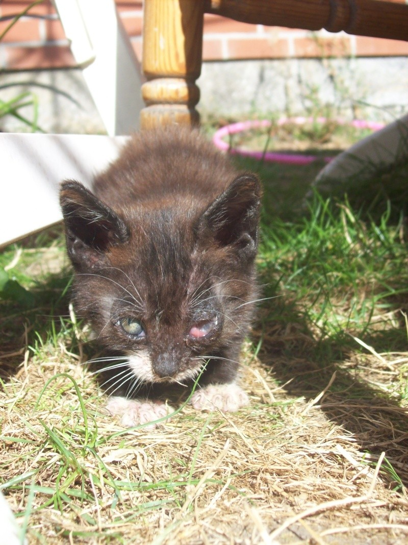3 petits chatons a adopter ( 2 mois ) 106_0150