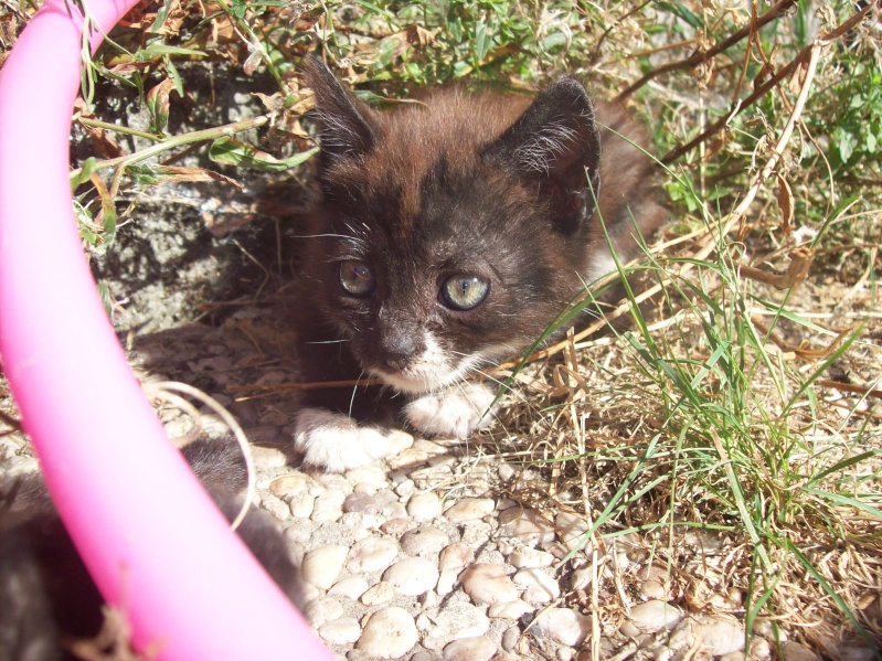 3 petits chatons a adopter ( 2 mois ) 106_0151