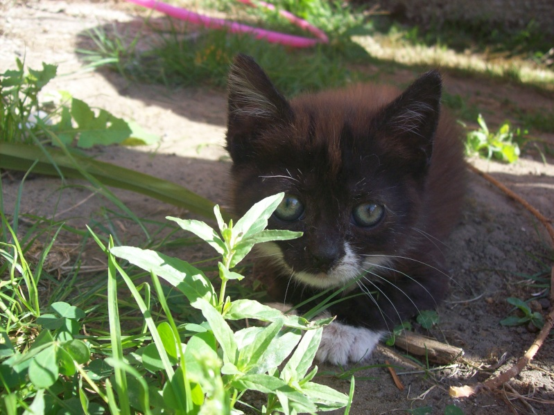 3 petits chatons a adopter ( 2 mois ) 106_0152
