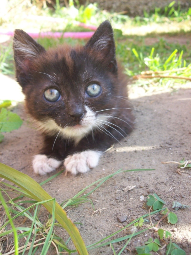 3 petits chatons a adopter ( 2 mois ) 106_0153