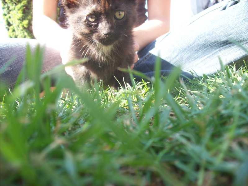3 petits chatons a adopter ( 2 mois ) 106_0155