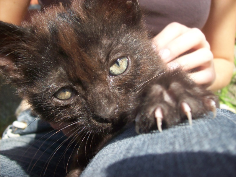 3 petits chatons a adopter ( 2 mois ) 106_0156