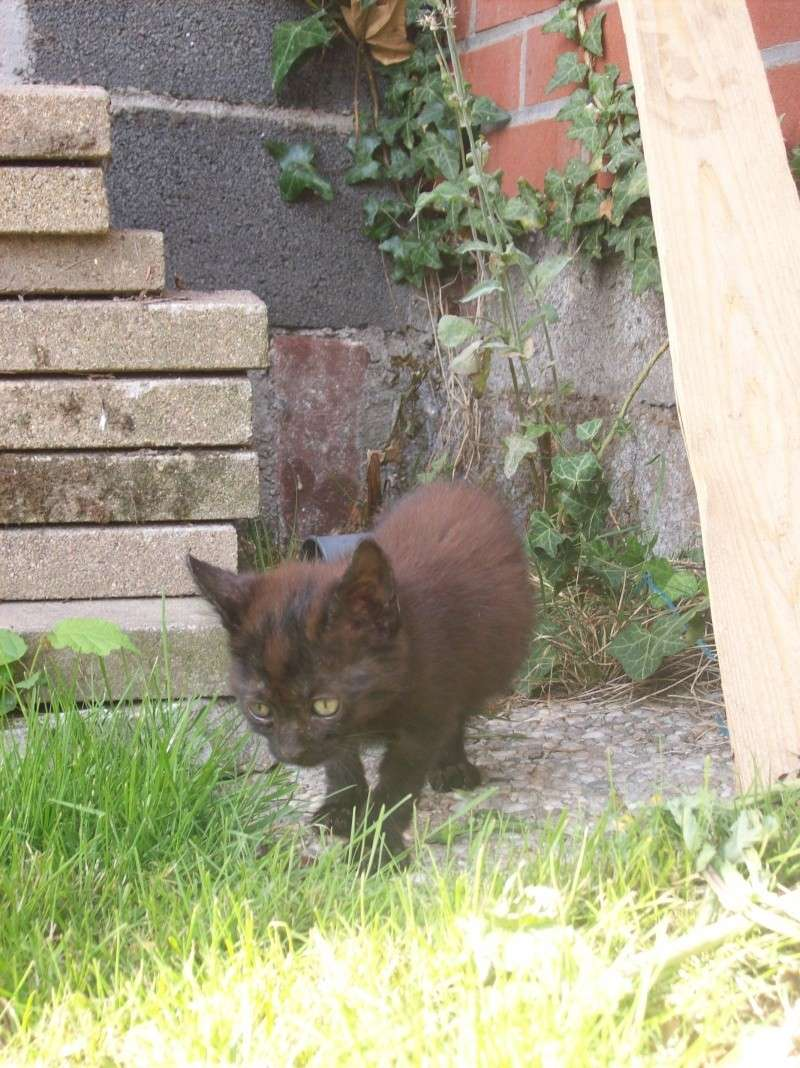 3 petits chatons a adopter ( 2 mois ) 106_0158