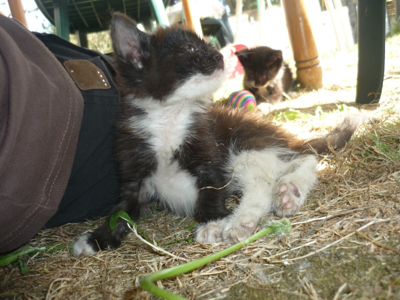 3 petits chatons a adopter ( 2 mois ) P1020017