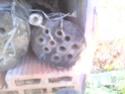 Maisons et hôtels à insectes pour le jardin le potager ..  Img_2010