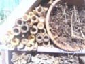 Maisons et hôtels à insectes pour le jardin le potager ..  Img_2011