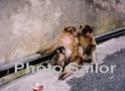 Avez-vous visité Gibraltar? Gibral12