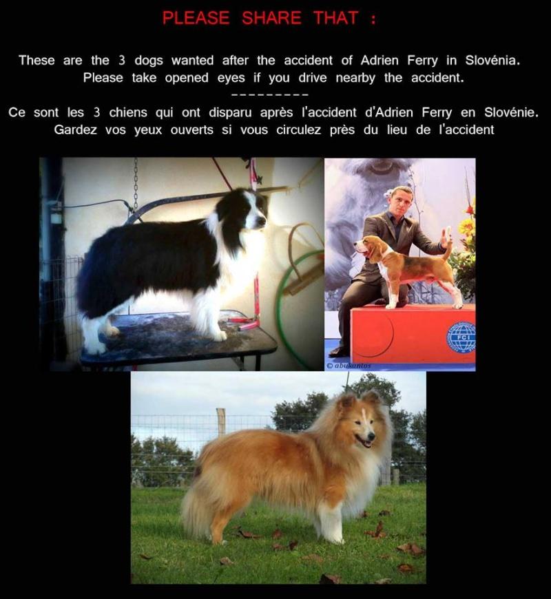 Little de Coralie et un autre chien perdu en Slovénie, diffusez svp!! 31006610
