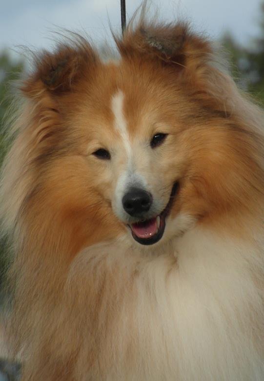 Little de Coralie et un autre chien perdu en Slovénie, diffusez svp!! - Page 8 39149510