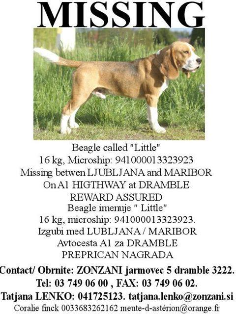 Little de Coralie et un autre chien perdu en Slovénie, diffusez svp!! 57926111