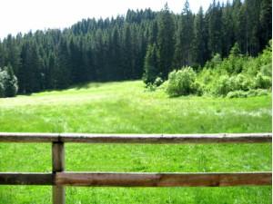 поляната