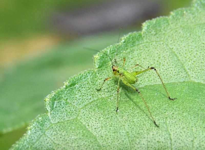 Insectopia Dscf2815