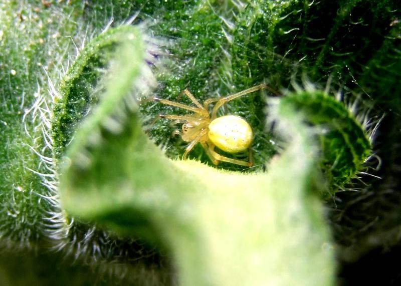 Insectopia Dscf2817