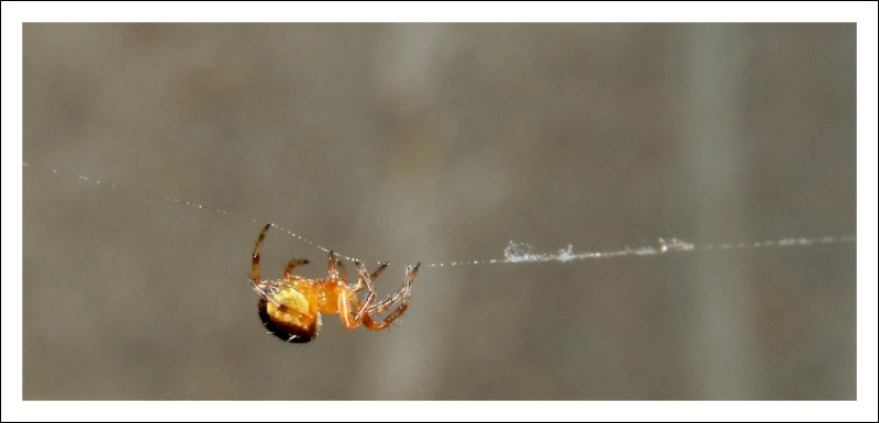 Insectopia Dscf3013