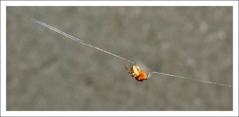 Insectopia Dscf3014