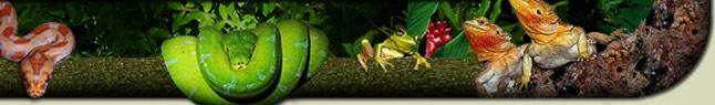 Le monde des reptiles F_head10