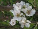 Thème du mois de Mai 2013 : Le printemps est enfin là ! Explosion de la nature Img_0210