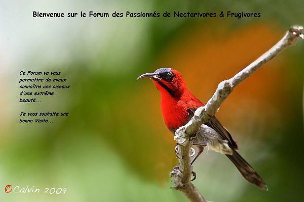 Les passionnés des nectarivores et frugivores