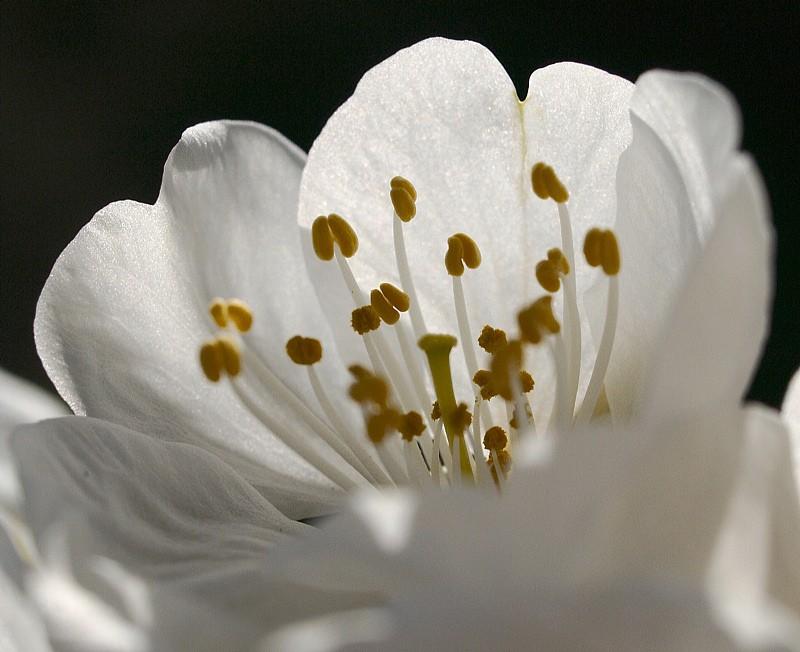 Vos plus belles photos du mois de mars 2009 _3240012