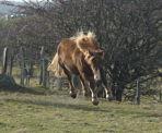 PATY, renommée PIMKIE - OC Breton x Comtois née en 2004 - Adoptée en janvier 2010 par deat 09_11_12