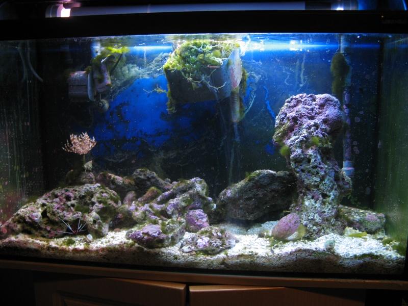 Jack's tank log Fish_011