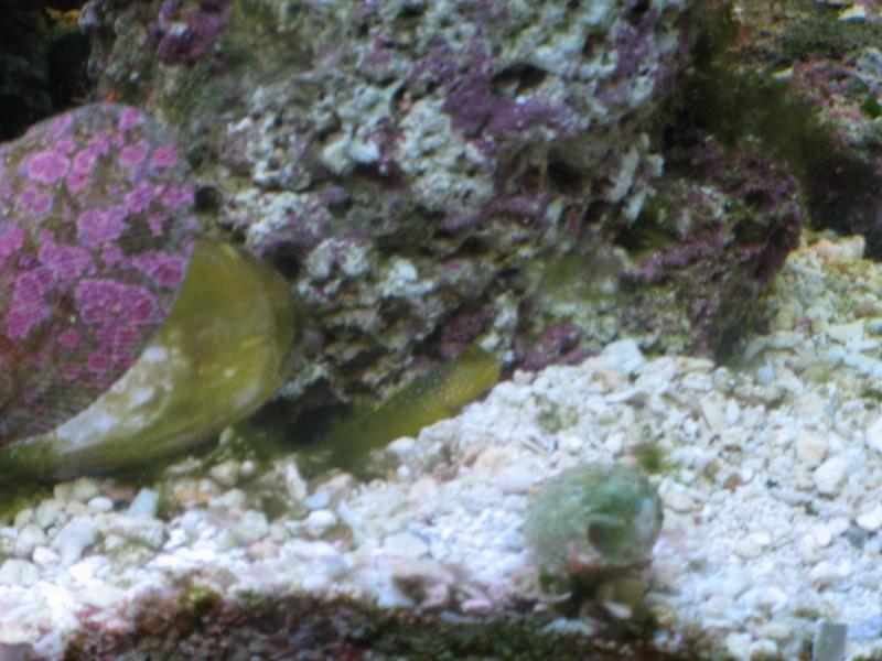 Jack's tank log Fish_014