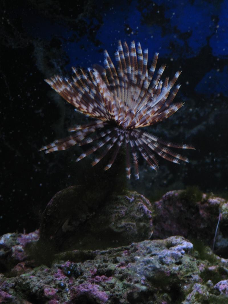 Jack's tank log Fish_015