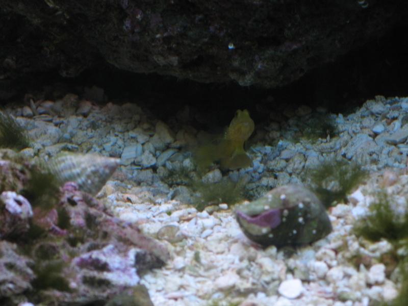 Jack's tank log Fish_016