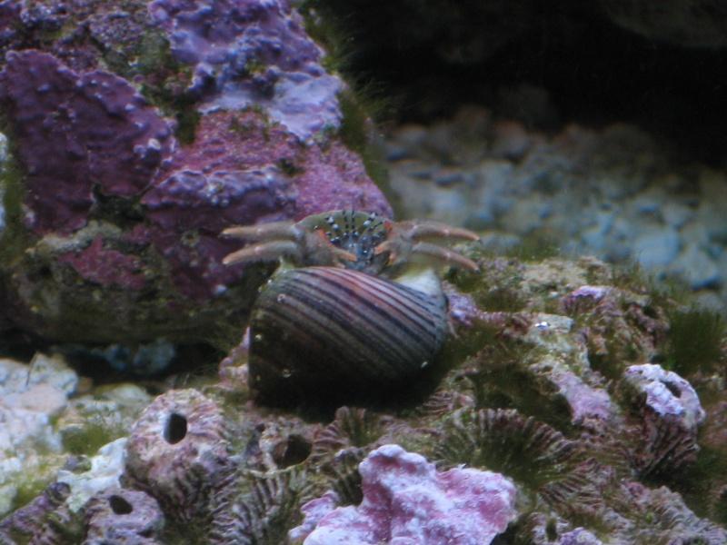 Jack's tank log Fish_017