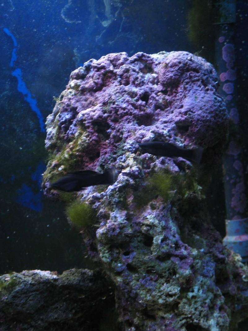 Jack's tank log Fish_018