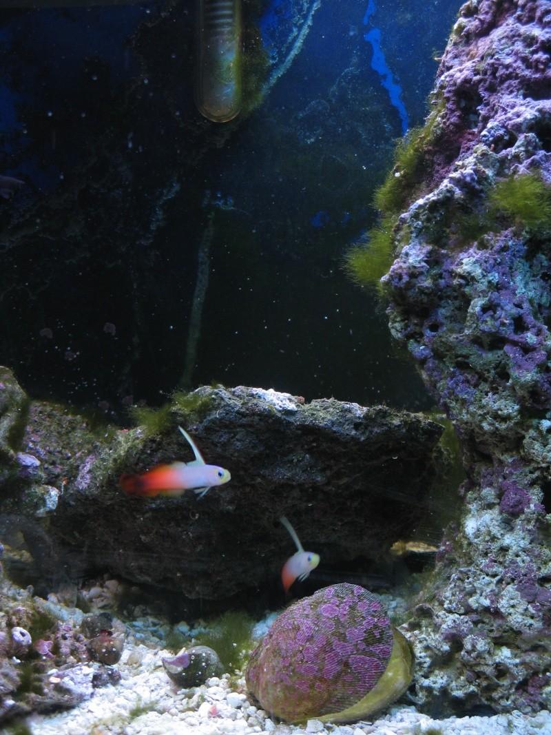 Jack's tank log Fish_020