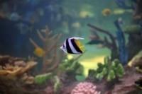 Les poissons de la presse 20ffa913