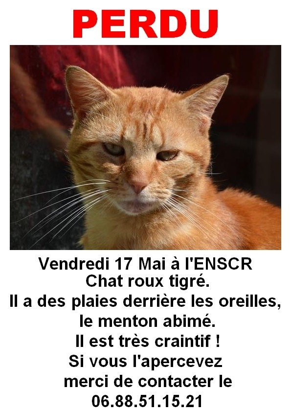 Perdu chat roux sur le Campus de Beaulieu (Mai 2013) Sans_t11