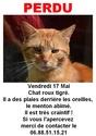 Perdu chat roux sur le Campus de Beaulieu (Mai 2013) Sans_t10