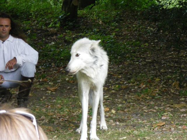 rencontre avec 3 loups Imgp0418
