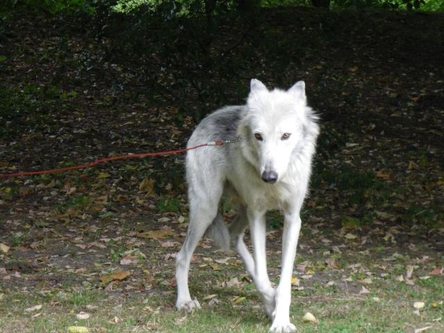 rencontre avec 3 loups Imgp0419