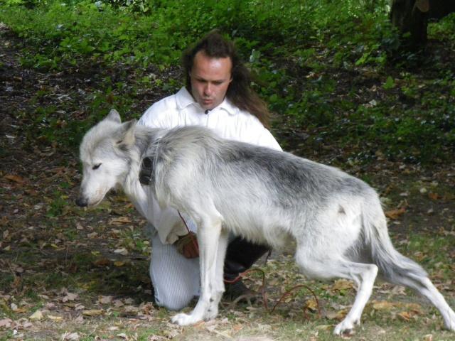 rencontre avec 3 loups Imgp0420