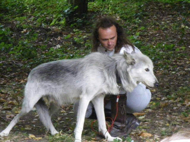 rencontre avec 3 loups Imgp0421