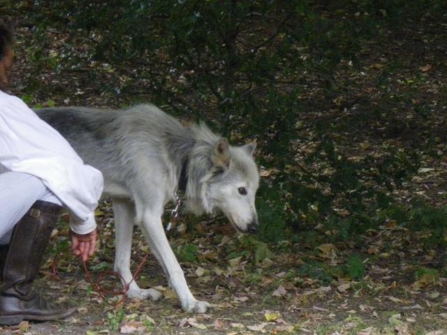 rencontre avec 3 loups Imgp0423