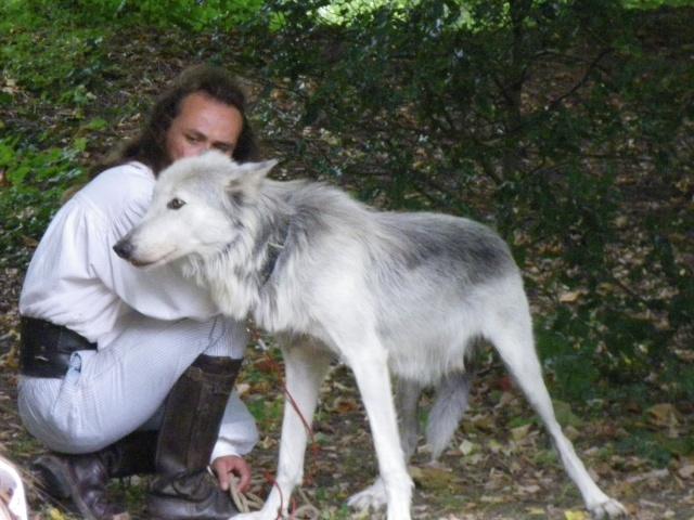 rencontre avec 3 loups Imgp0424