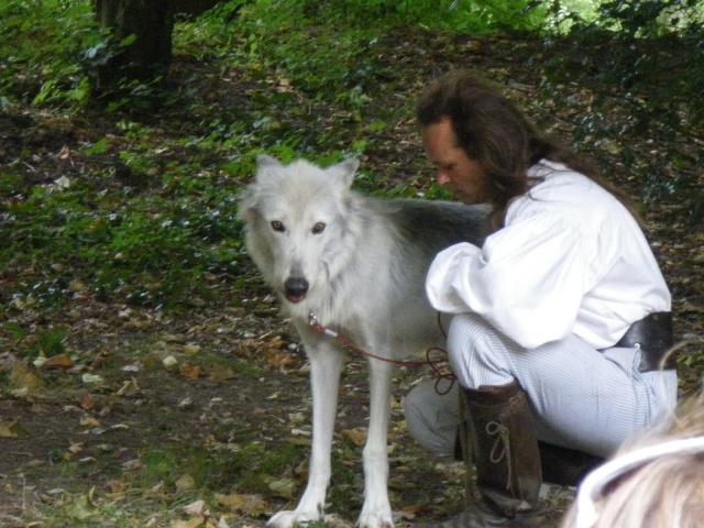 rencontre avec 3 loups Imgp0425